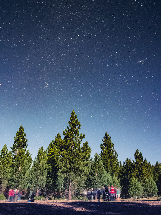 stargazers in forest