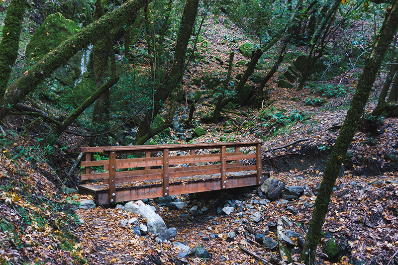 footbridge in forest with fallen leaves