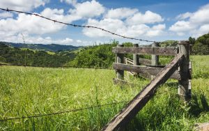 old fence in grassy meadow