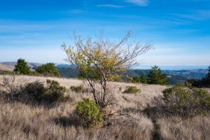 a tree with cheerful yellow leaves in a dry grassy landscape