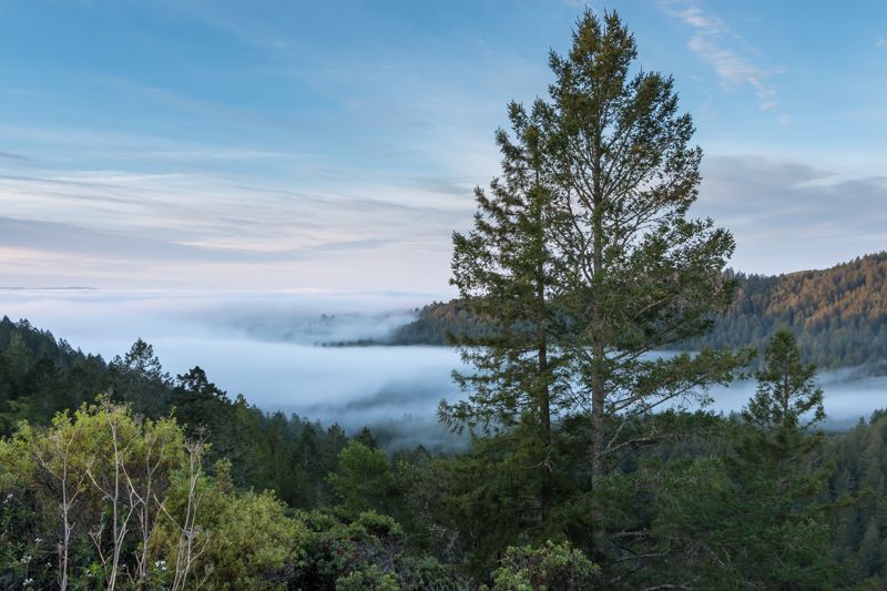 fog in a valley with a tree in foreground