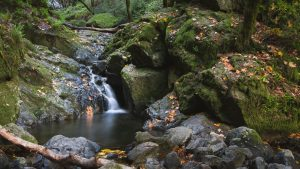 a small waterfall spilling into a pool surrounded by large, moss-covered rocks and fallen leaves