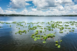 puffy white clouds reflected in a lake with lily pads in the foreground