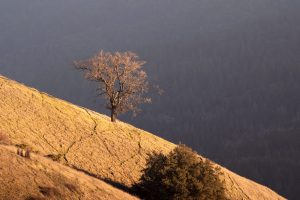 a lone oak tree on the edge of a hill overlooking a valley