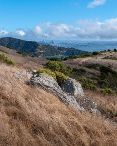 grassy landscape with san francisco in the distance