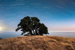 night falls on a lone tree standing on a ridge